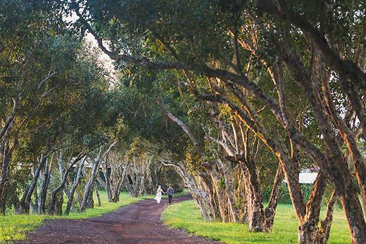 Puakea Ranch | メリアウエディングス | Melia Weddings Big Island, Hawaii